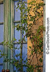 bois, fenêtre
