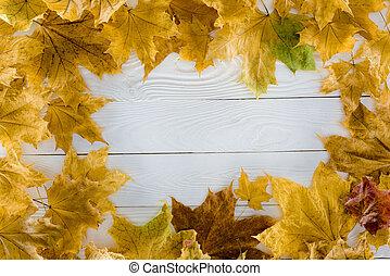 bois, feuilles, érable, surface