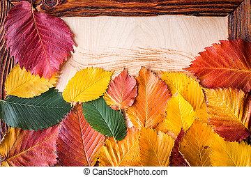 bois, feuilles automne, cadre