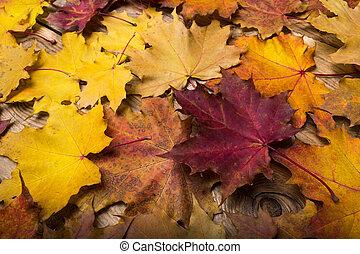 bois, feuilles, rustique, automne, table, érable