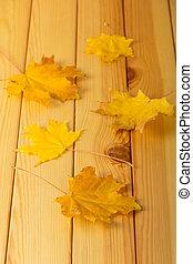 bois, feuilles, surface, automne, peu, clair