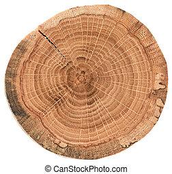 bois, fissures, arbre, section, annuel, chêne, croix, texture, isolé, rings., couper, fond, blanc, morceau, circulaire
