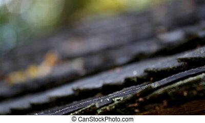 bois, flétri, a, feuilles, toit