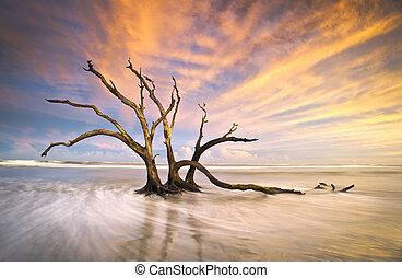 bois flottant, folie, arbre, scène, mort, océan, coucher ...