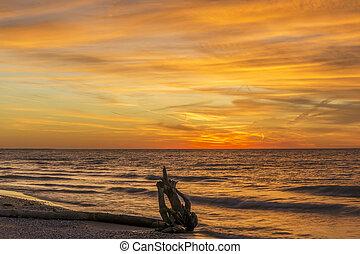 bois flottant, sur, a, huron lac, plage, à, coucher soleil