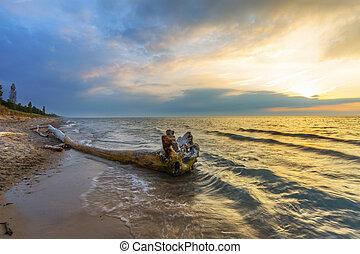 bois flottant, sur, a, huron lac, plage