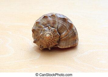 bois, fond, mer, ??shell