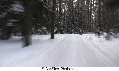 bois, hiver, route