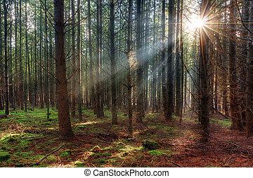bois, levers de soleil