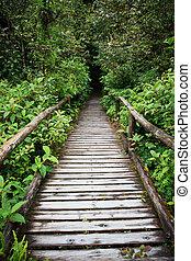 bois, marche, manière, dans, colline, arbre vert, forêt, de, doi, inthanon, chiangmai, nord, thaïlande
