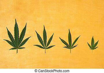 bois, marijuana, arrière-plan., feuilles, rang, vert jaune, ...