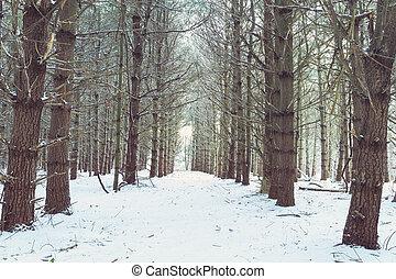 bois, par, hiver, chemin