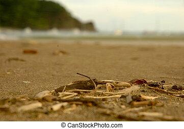 bois, plage