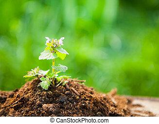 bois, plante, concept, vieux, printemps, jeune, contre, arrière-plan., écologie, naturel