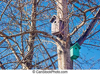 bois, printemps, birdhouses, arbre, deux