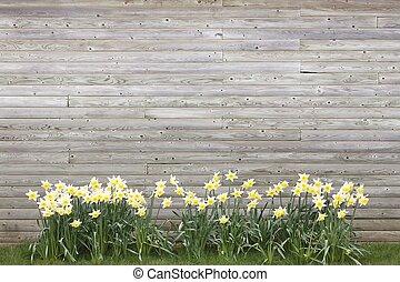 bois, printemps, contre, croissant, fond, jonquilles