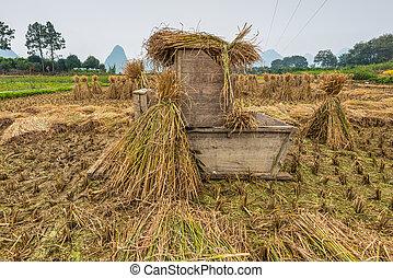 bois, riz, outillage, traitement, récolte