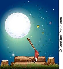 bois, scène, nuit