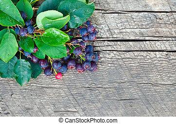 bois, shadberry, baie, fond, branche