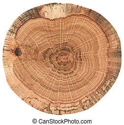 bois, souche, arbre, section, chêne, croix, texture, isolé, rings., croissance, fond, blanc, morceau, circulaire