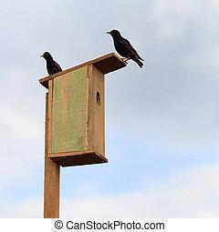 bois, starlings, birdhouse