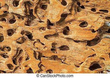 images et photos de termite trous bois fond 116 images et photographies libres de droits de. Black Bedroom Furniture Sets. Home Design Ideas