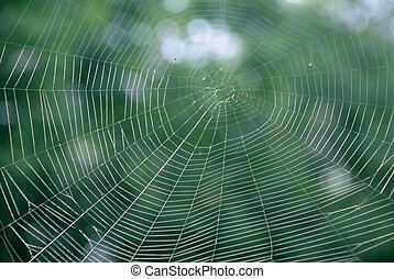 bois, toile araignée