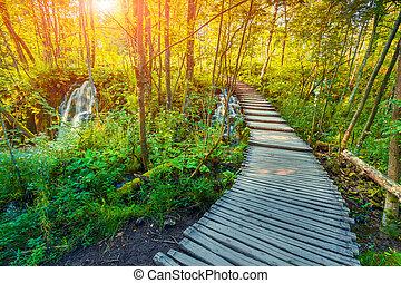 bois, touriste, sentier, dans, plitvice, lacs, parc national