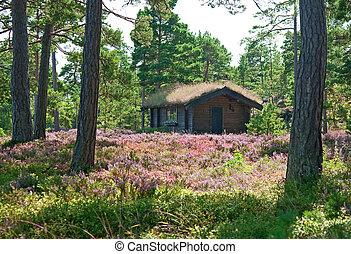 bois, wildflower, pré, cabine