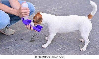 boissons, propriétaire, chouchou, chien, portable, bouteille, marchant, eau