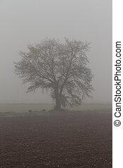 bojiště, mlha