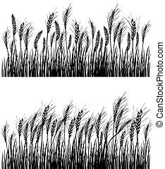 bojiště, o, pšenice