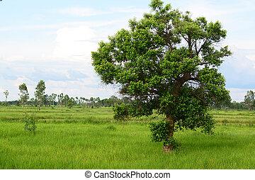 bojiště, strom