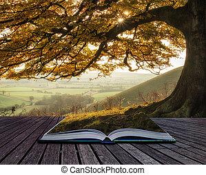 bok, begrepp, bedöva, höst, morgon, solljus, lyse, landskap,...