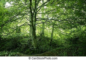 bok, grön, magi, skog, veder