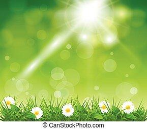 boke, herbe, arrière-plan vert