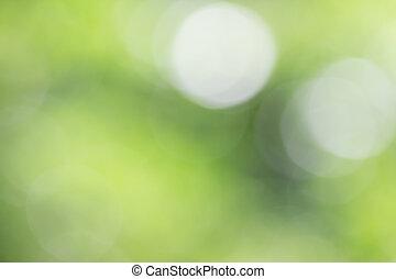 bokeh, árvore verde
