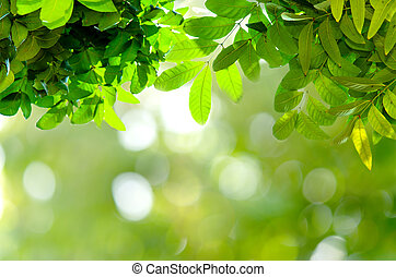 bokeh, зеленый, leaves, задний план