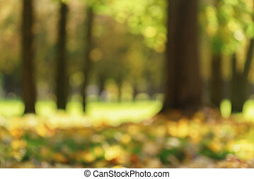 bokeh background of maple tree with bright autumn leaves in sunlight