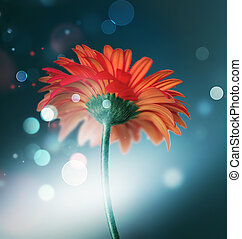 bokeh background with red flower
