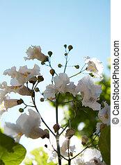 bokeh, bloemen, achtergrond