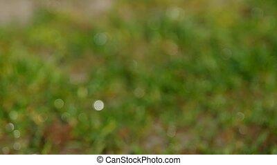 Bokeh drops of water
