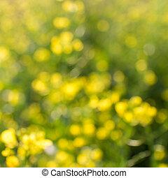 bokeh, fleurs, naturel, fond