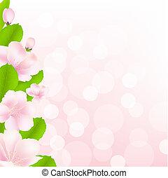 bokeh, flores, árvore, maçã