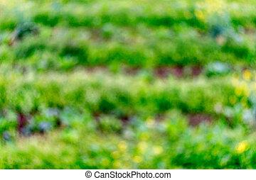 bokeh, fokus, grün, bauernhof, natürlich, kleingarten