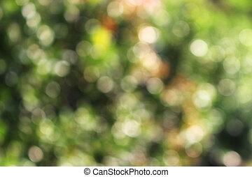 bokeh, grüner hintergrund