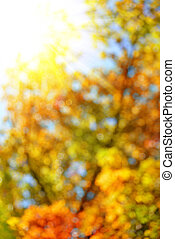 Bokeh in the Autumn forest