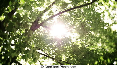 Bokeh Light From The Sun Through The Leaves