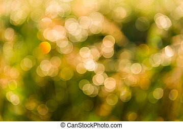 Bokeh of Drops of water on the grass