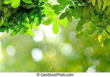 bokeh, und, grüne blätter, hintergrund